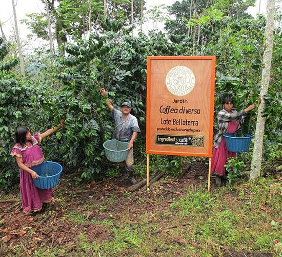 El mejor café de origen en el Jardin Coffea Diversa