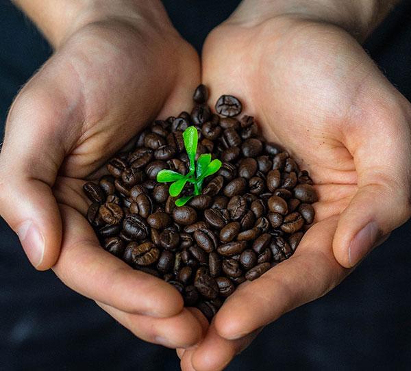 Origin coffee Ingredients